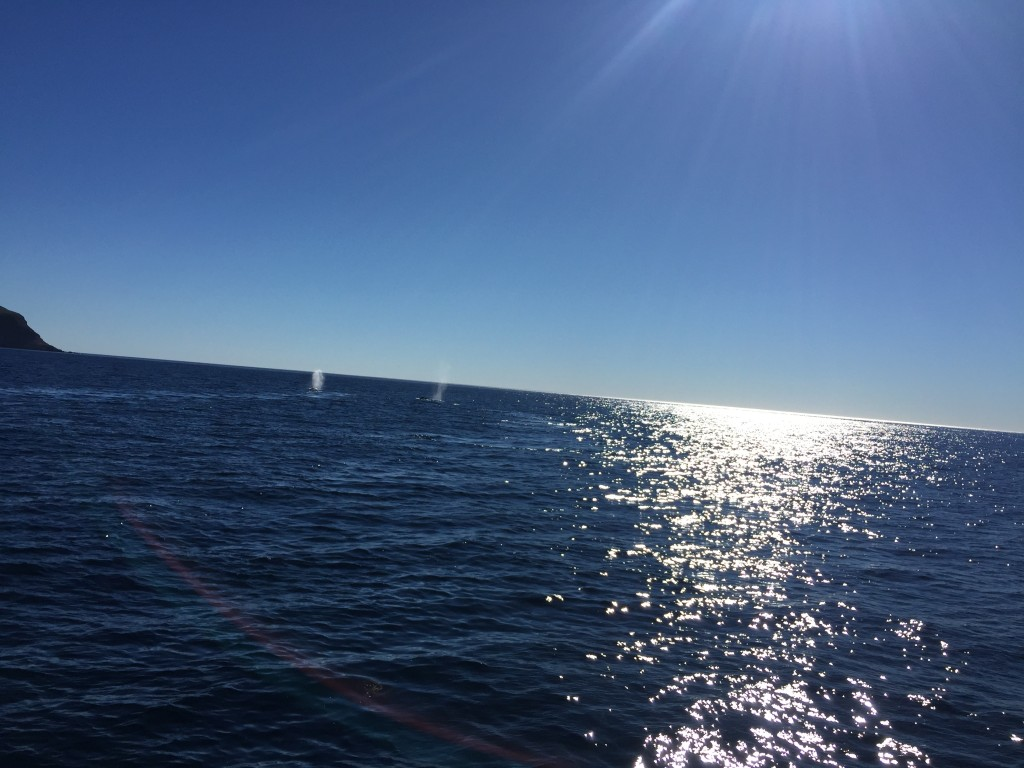 Two whale spouts just left of the sun stream