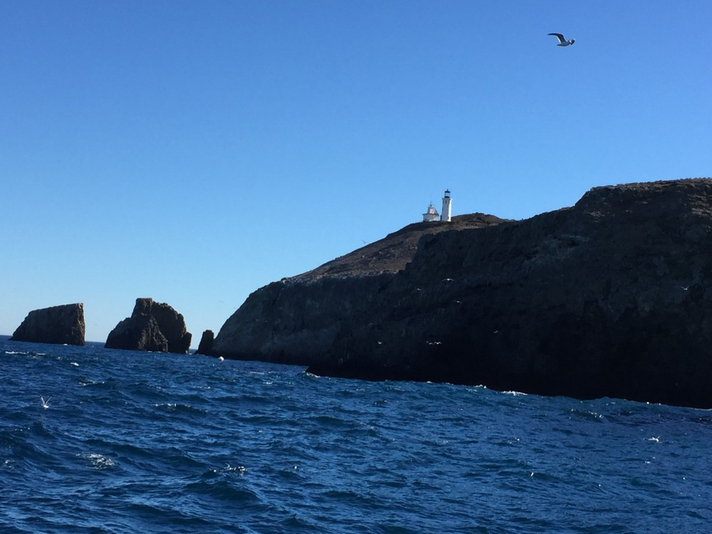 Lighthouse with Seagull - east end of Anacapa Island
